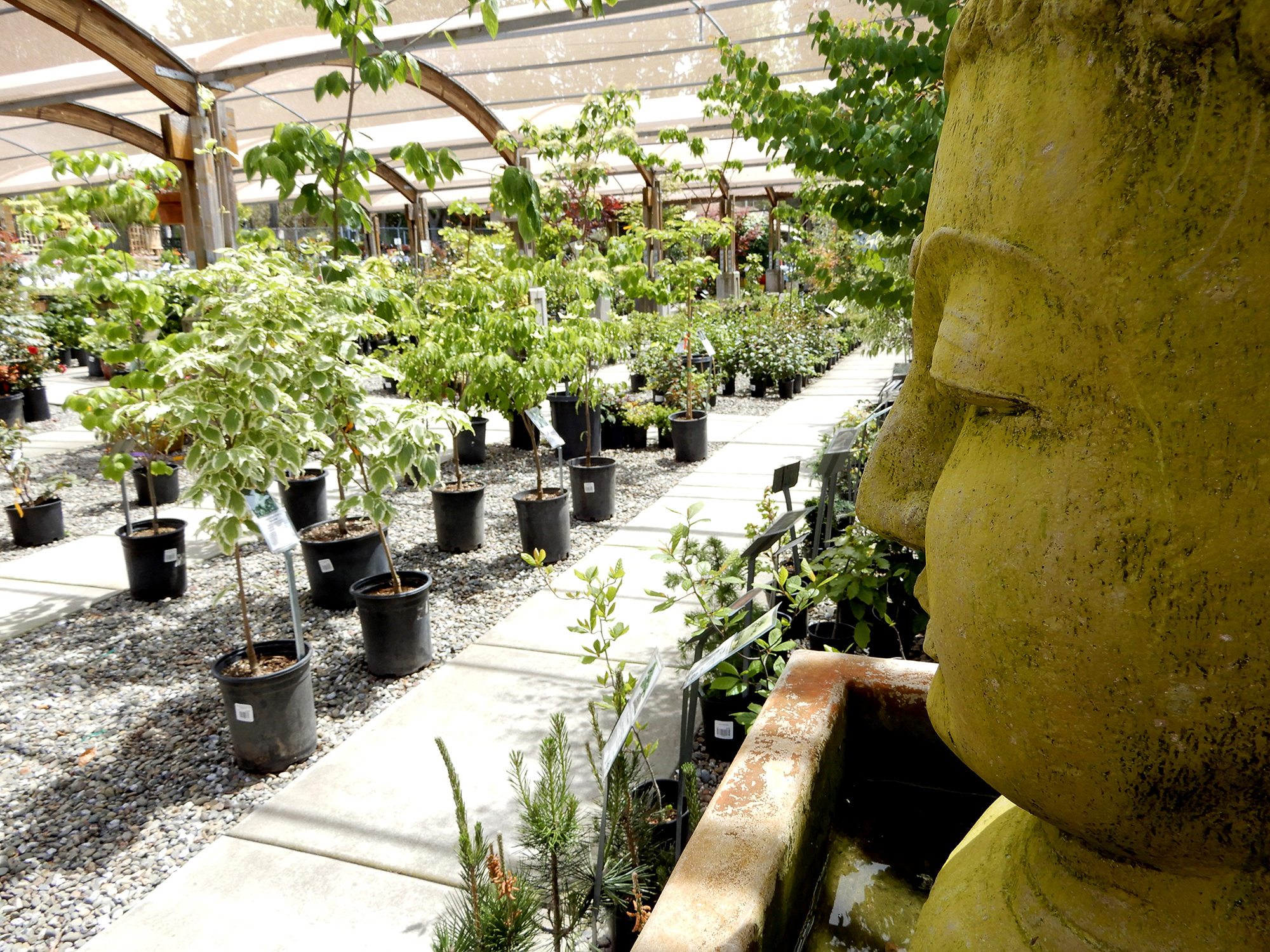 buddha statue in nursery - Photo by Helen Krayenhoff