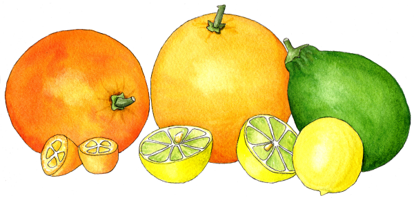 watercolor-citrus-in-a-row