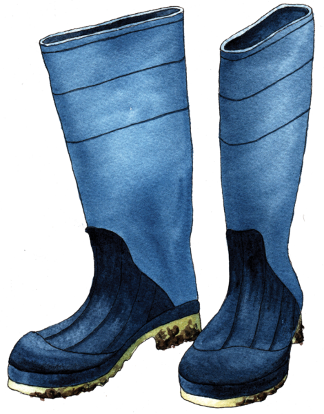 Boot - Illustration by Helen Krayenhoff